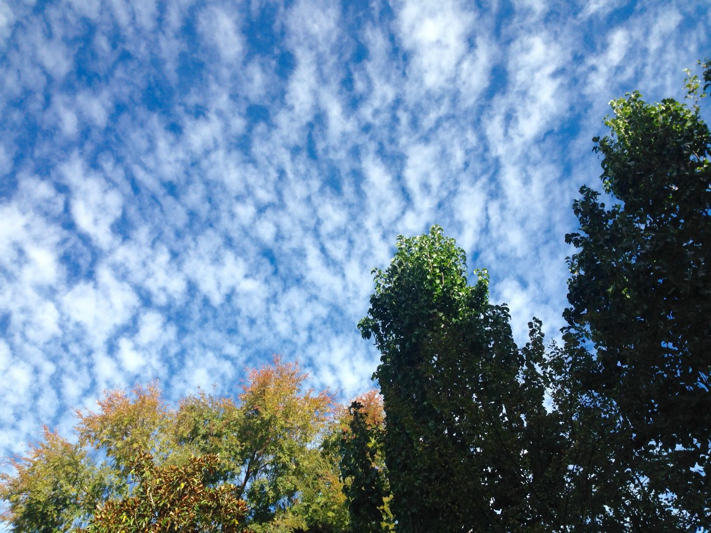 sky writing perth